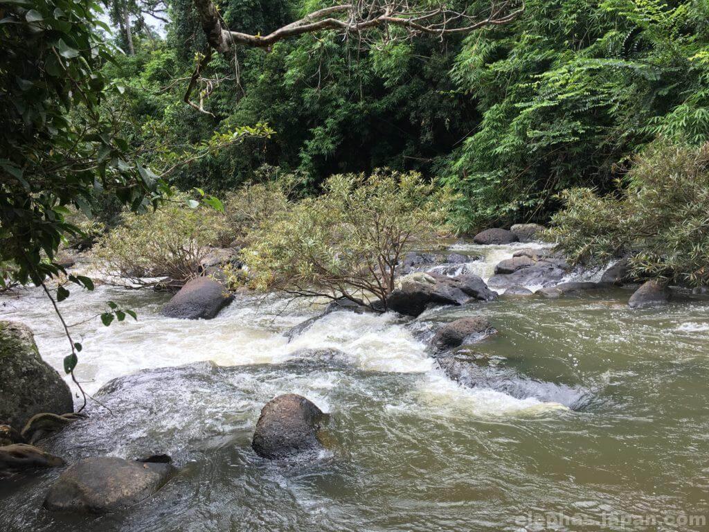 カオヤイ国立公園の川