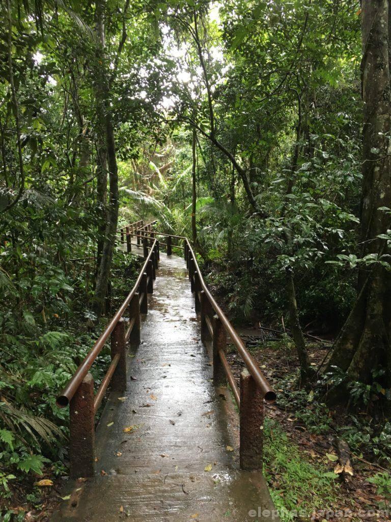 カオヤイ国立公園の林道