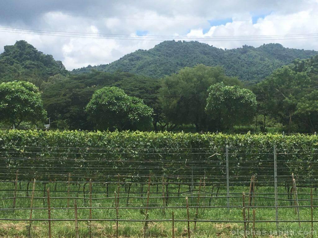 カオヤイグランモンテの風景