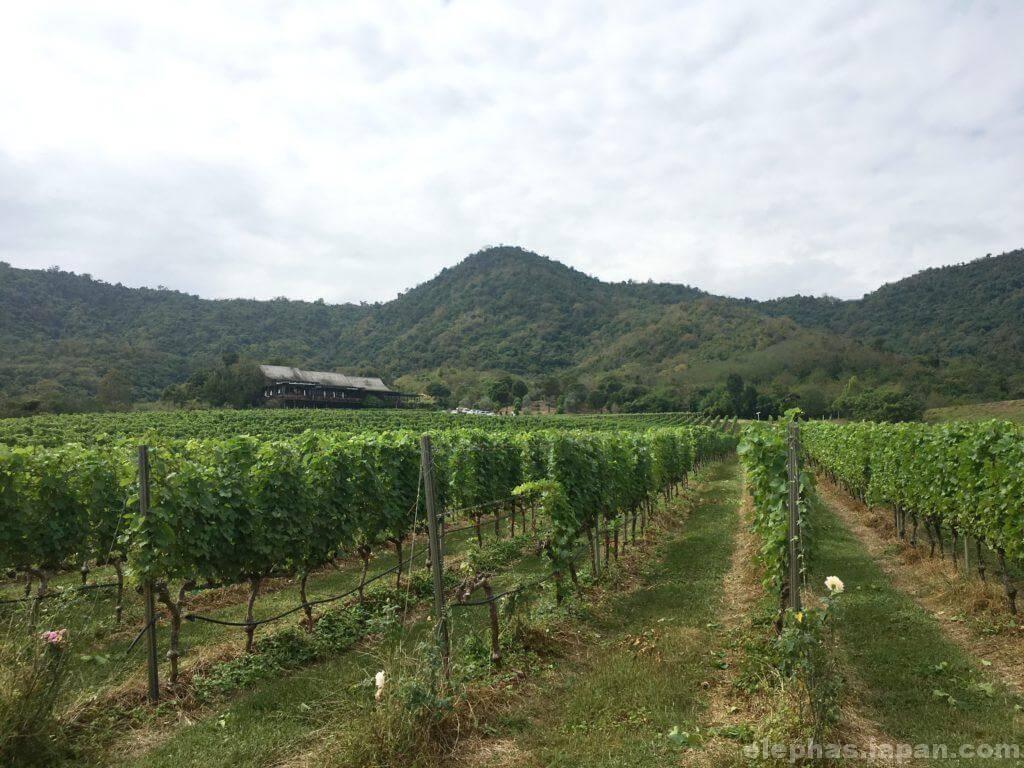 モンスーンバレーのブドウ園