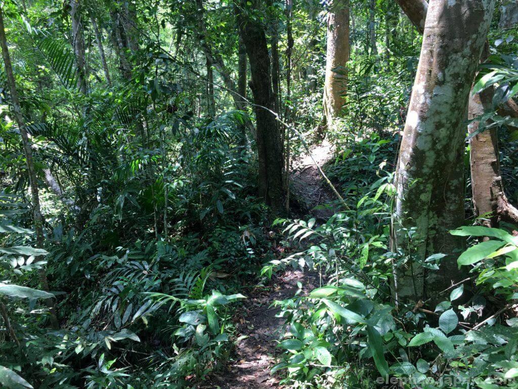 カオヤイ国立公園のトレッキングコース