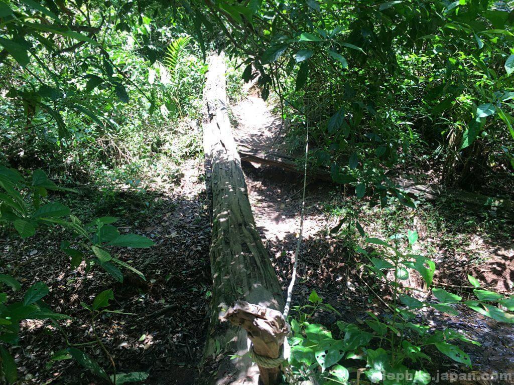 カオヤイ国立公園のトレッキングコース2
