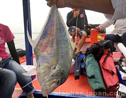 陣田筏で大物釣り2